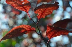 leaves-56986_640