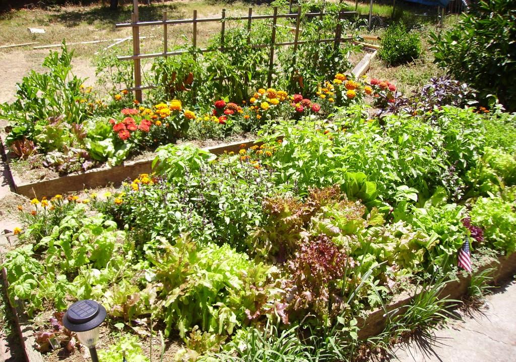 Conseils Jardinage Bio Et Tude Personnalis E Potager Malin